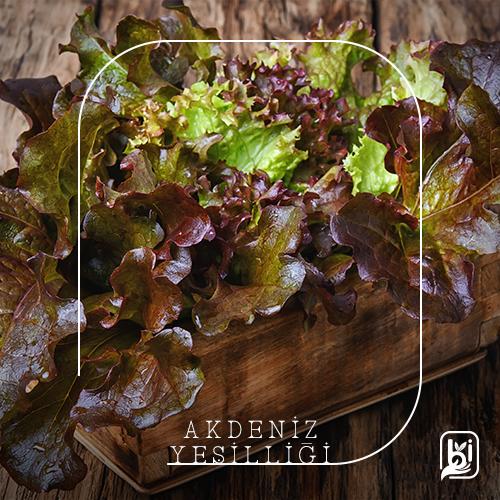 Akdeniz Yeşilliği (500gr. Paket)