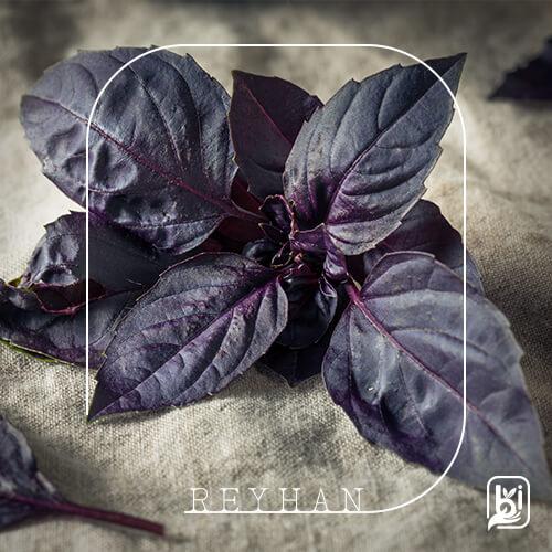 Reyhan (1 Bağ)